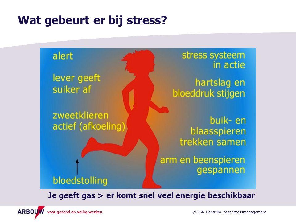 Wat gebeurt er bij stress
