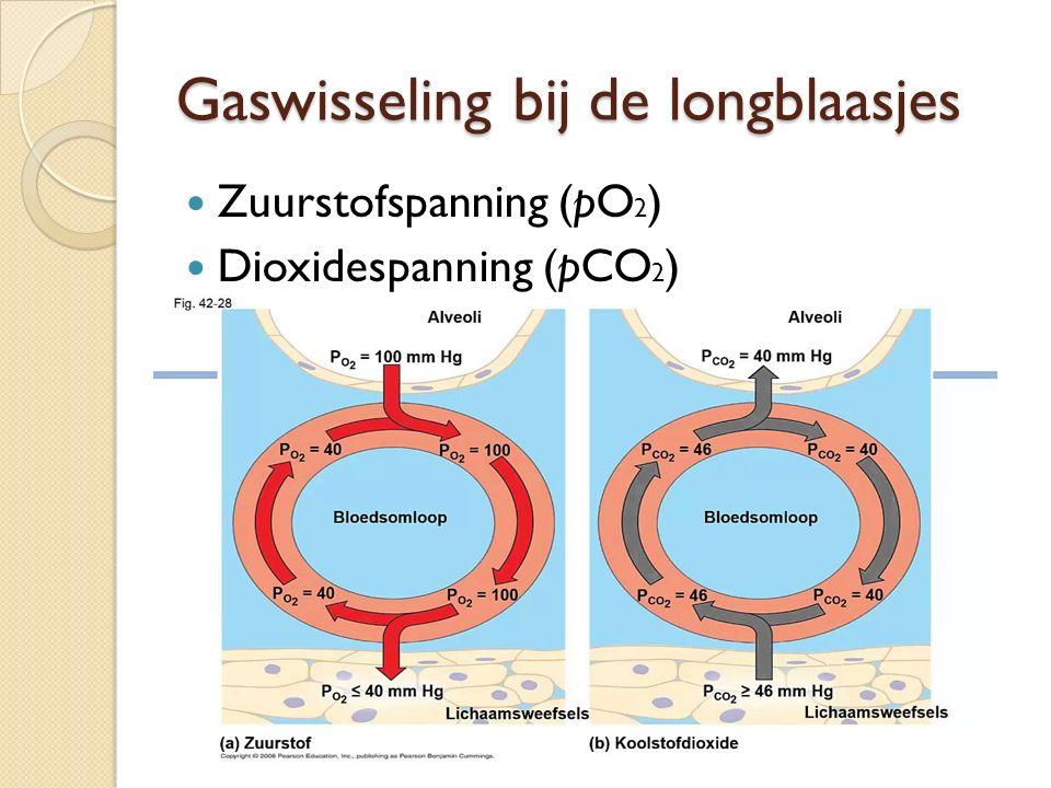 Gaswisseling bij de longblaasjes