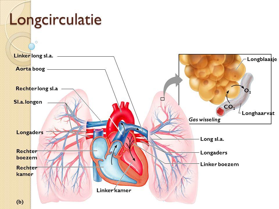 Longcirculatie Linker long sl.a. Longblaasje Aorta boog