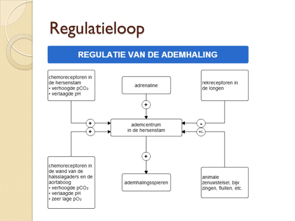 Regulatieloop