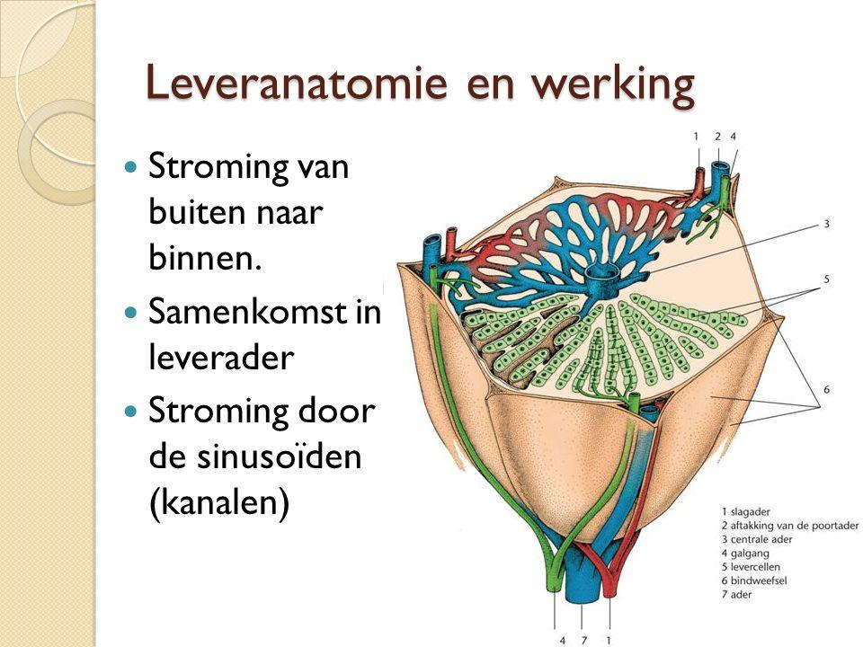 Leveranatomie en werking