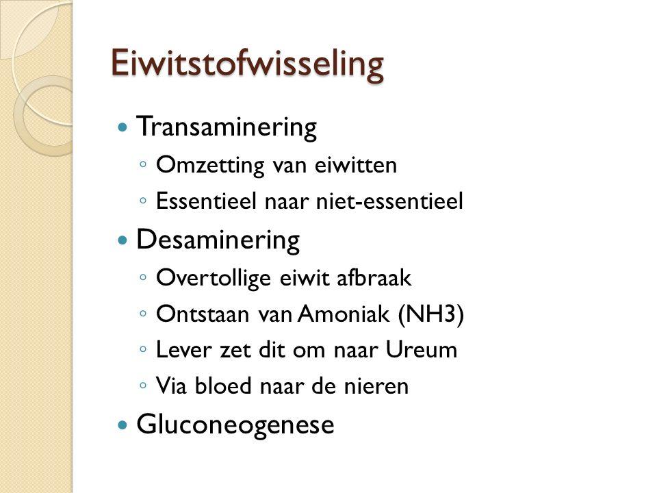 Eiwitstofwisseling Transaminering Desaminering Gluconeogenese