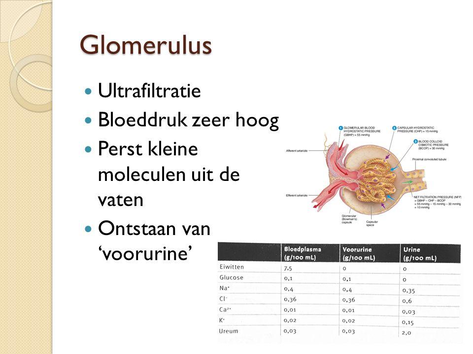 Glomerulus Ultrafiltratie Bloeddruk zeer hoog
