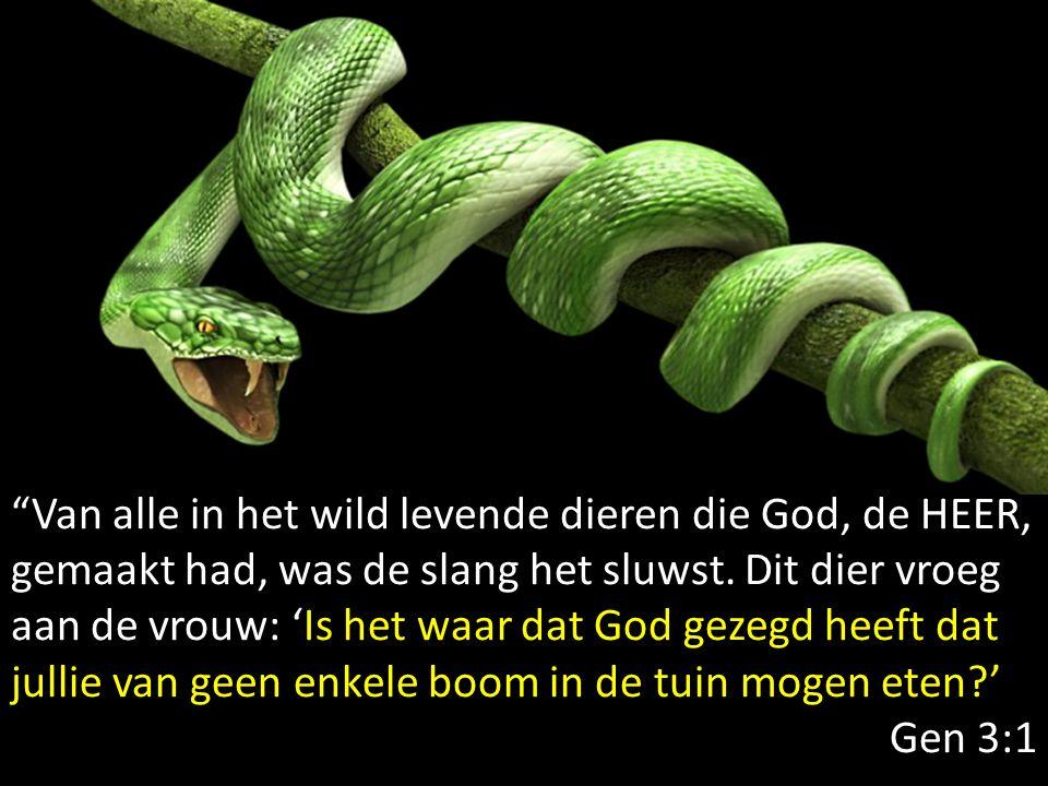 Van alle in het wild levende dieren die God, de HEER, gemaakt had, was de slang het sluwst. Dit dier vroeg aan de vrouw: 'Is het waar dat God gezegd heeft dat jullie van geen enkele boom in de tuin mogen eten '