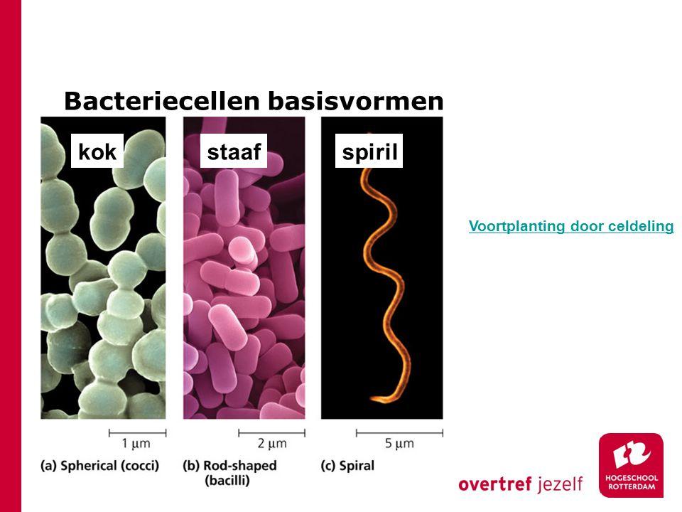 Bacteriecellen basisvormen