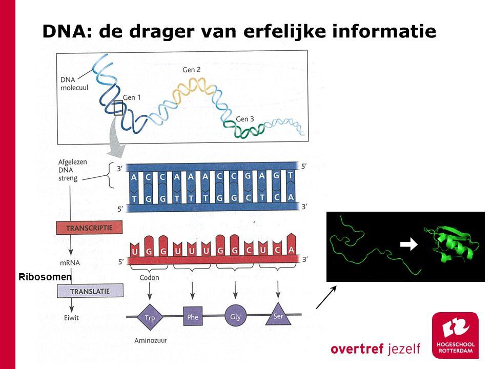 DNA: de drager van erfelijke informatie