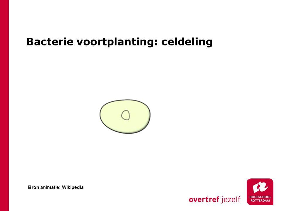 Bacterie voortplanting: celdeling