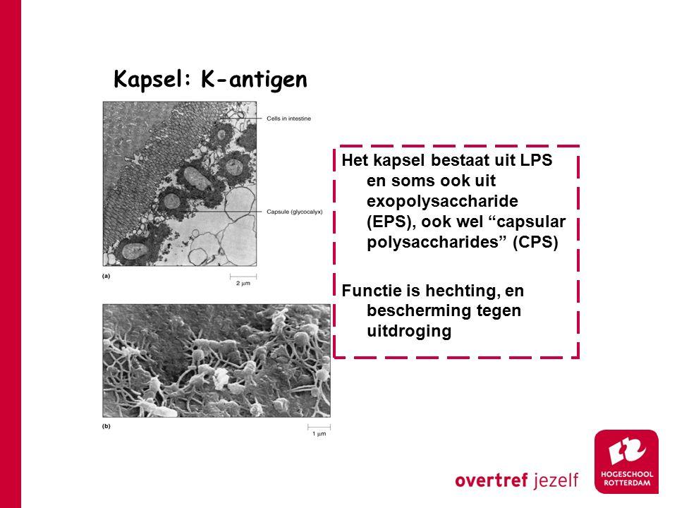 Kapsel: K-antigen Het kapsel bestaat uit LPS en soms ook uit exopolysaccharide (EPS), ook wel capsular polysaccharides (CPS)