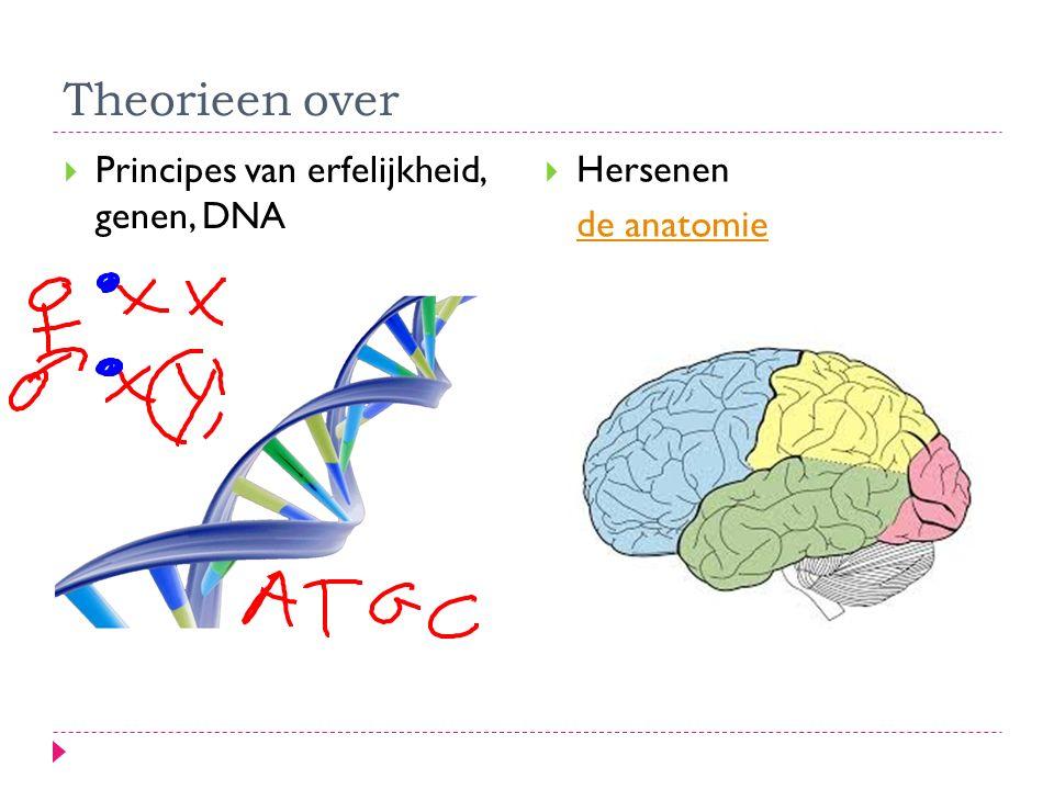 Theorieen over Principes van erfelijkheid, genen, DNA Hersenen