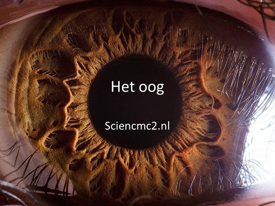 Het oog Sciencmc2.nl