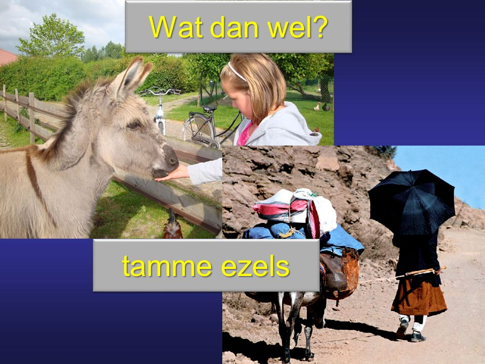 Wat dan wel tamme ezels