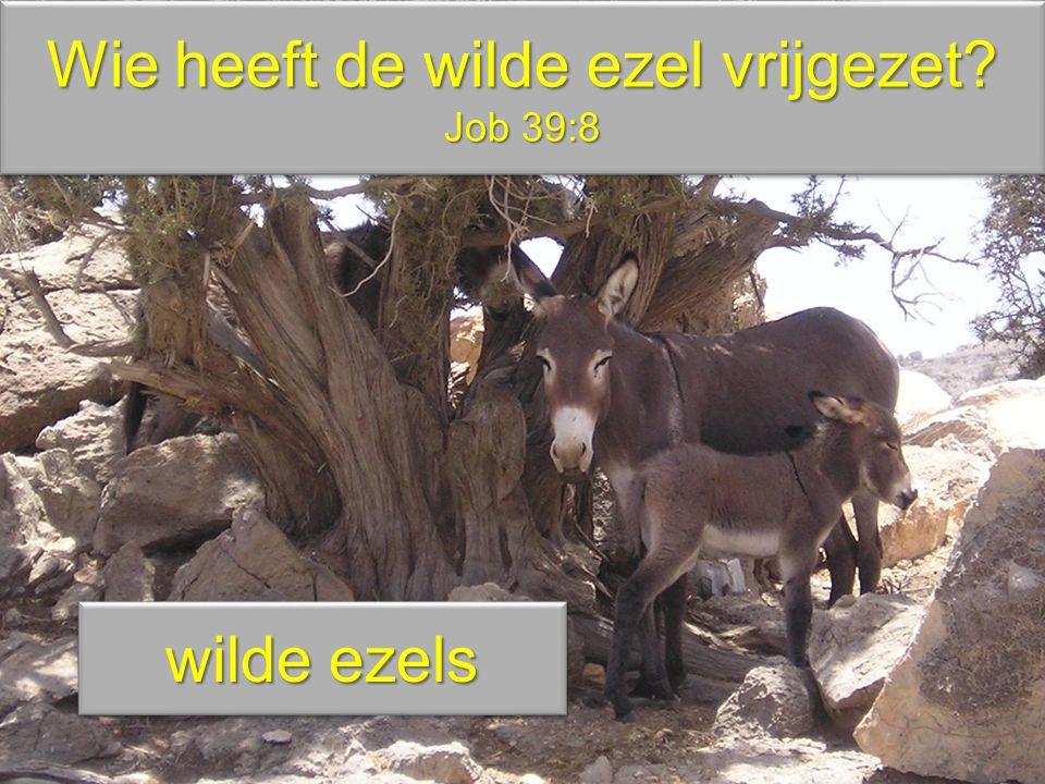 Wie heeft de wilde ezel vrijgezet