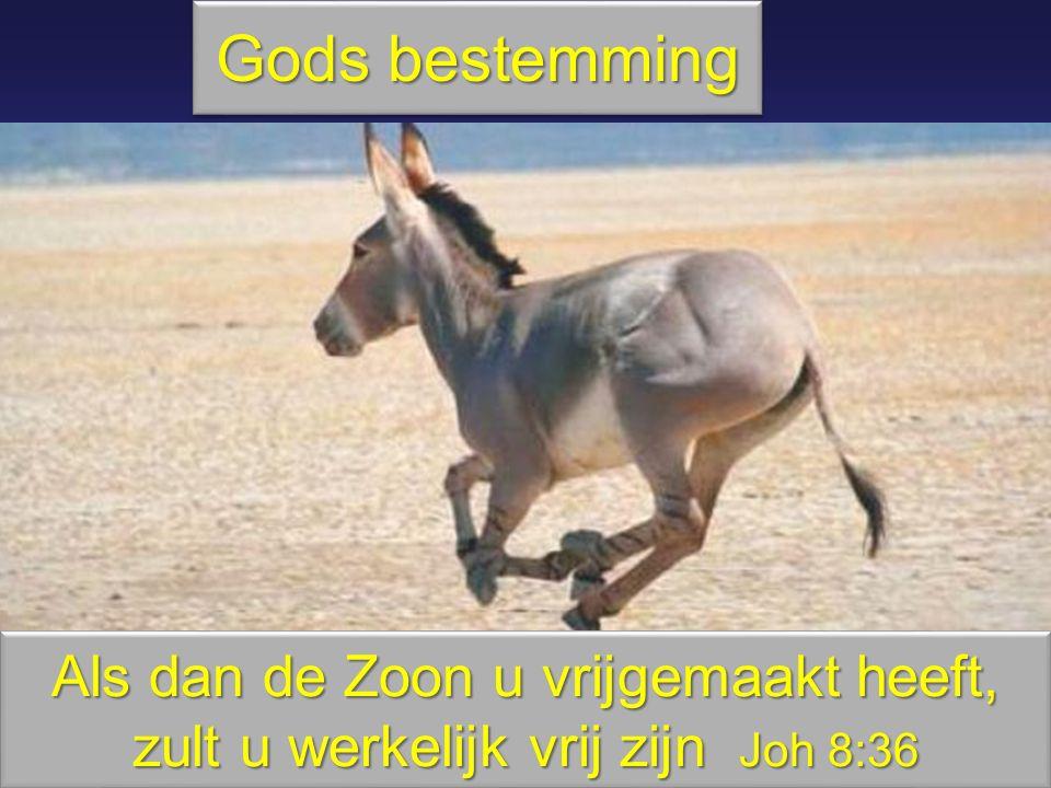 Gods bestemming Als dan de Zoon u vrijgemaakt heeft, zult u werkelijk vrij zijn Joh 8:36