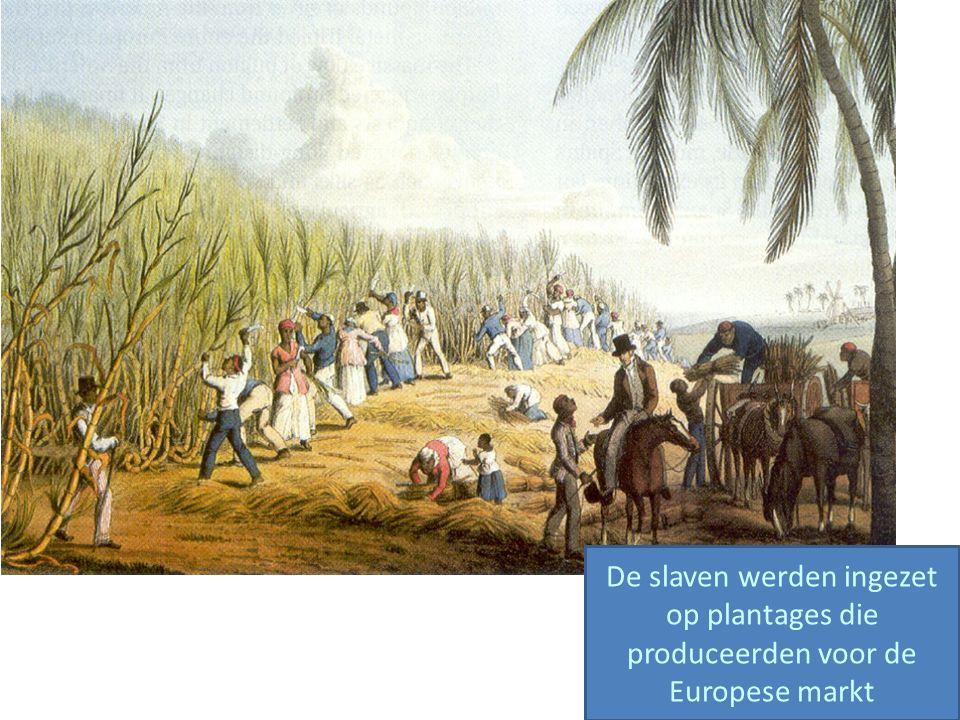 De slaven werden ingezet op plantages die produceerden voor de Europese markt