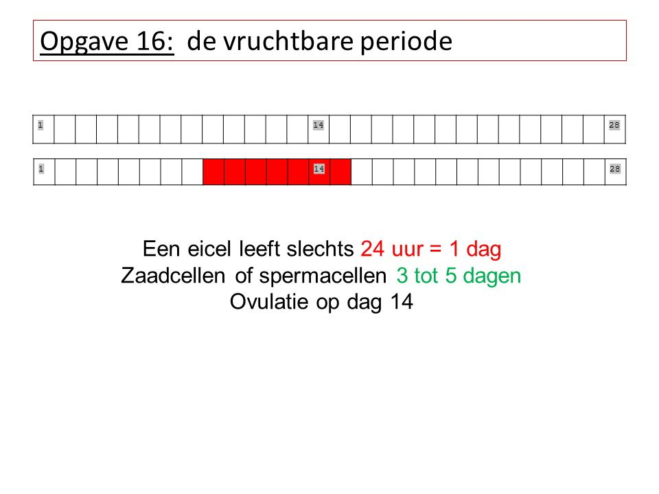 Opgave 16: de vruchtbare periode