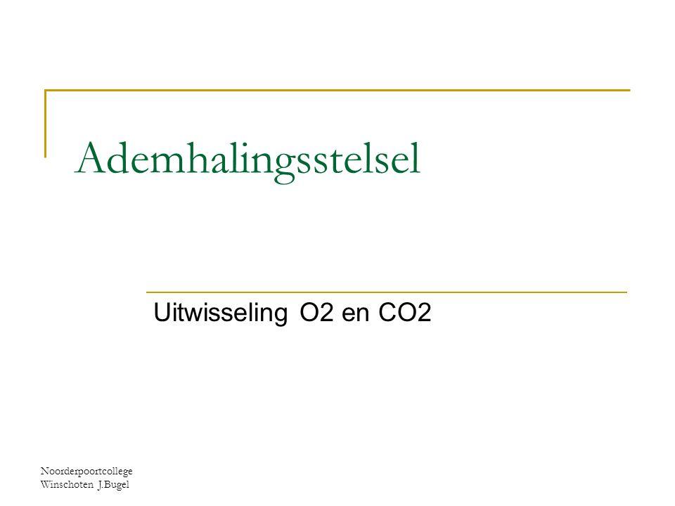 Ademhalingsstelsel Uitwisseling O2 en CO2
