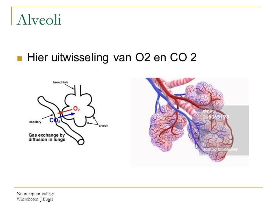 Alveoli Hier uitwisseling van O2 en CO 2