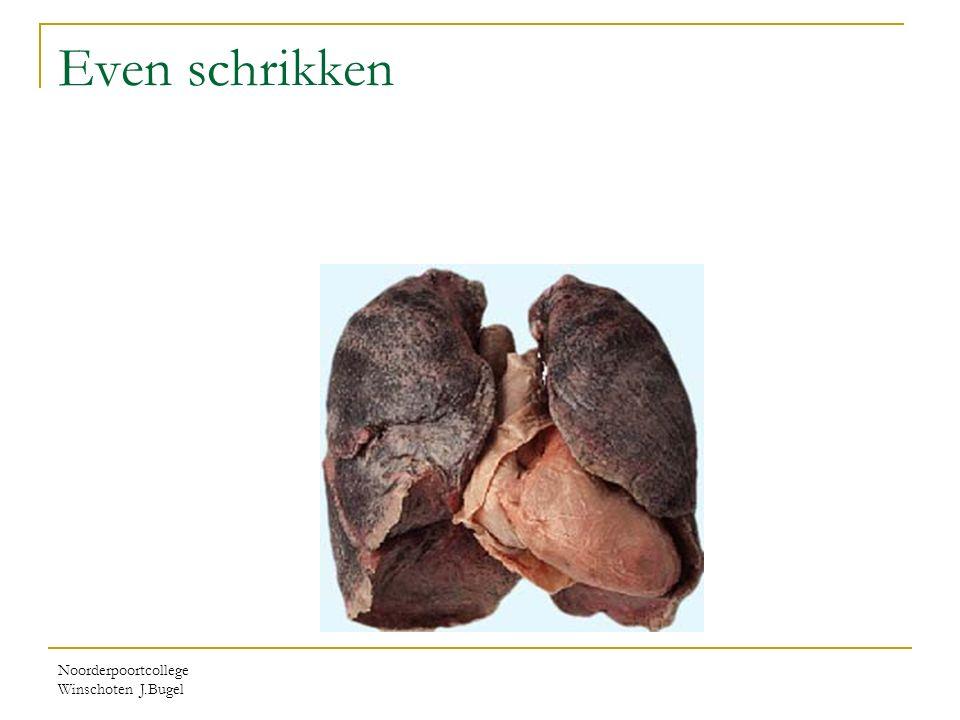 Even schrikken Noorderpoortcollege Winschoten J.Bugel