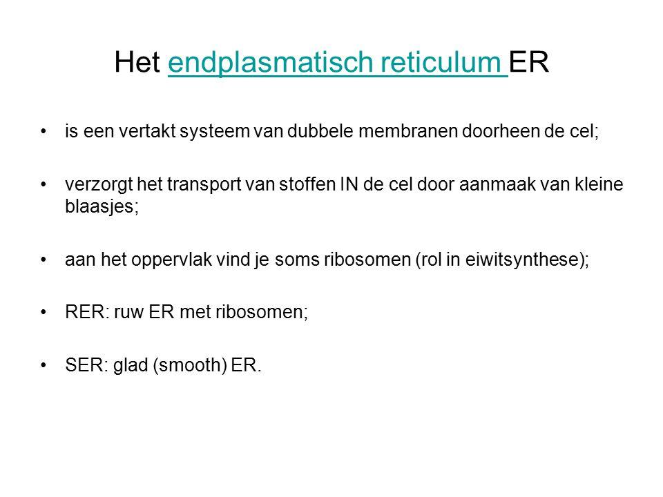 Het endplasmatisch reticulum ER