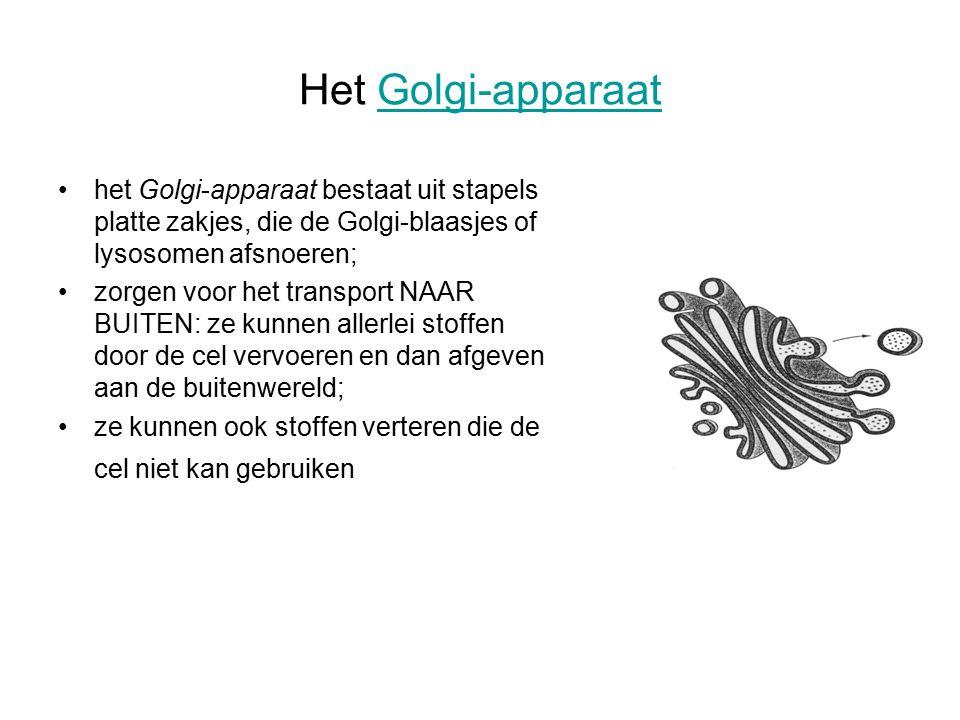 Het Golgi-apparaat het Golgi-apparaat bestaat uit stapels platte zakjes, die de Golgi-blaasjes of lysosomen afsnoeren;