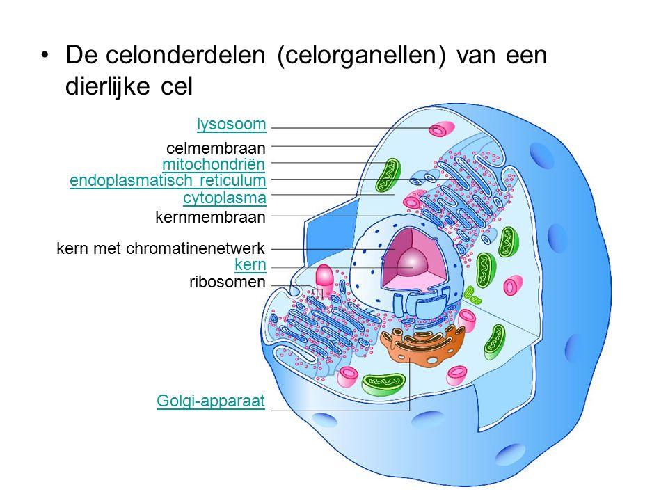 De celonderdelen (celorganellen) van een dierlijke cel