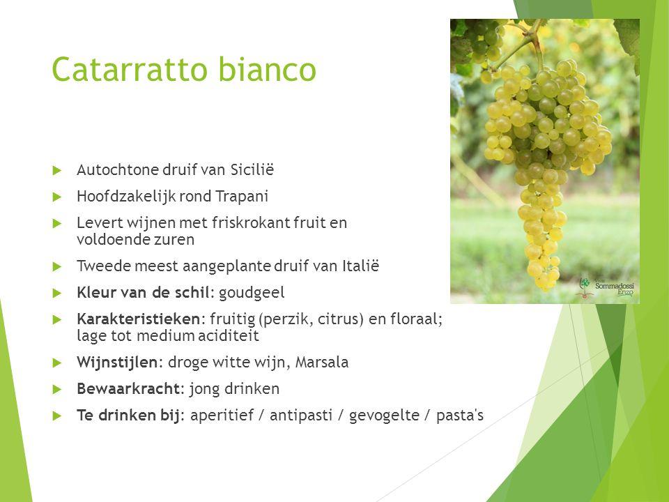 Catarratto bianco Autochtone druif van Sicilië