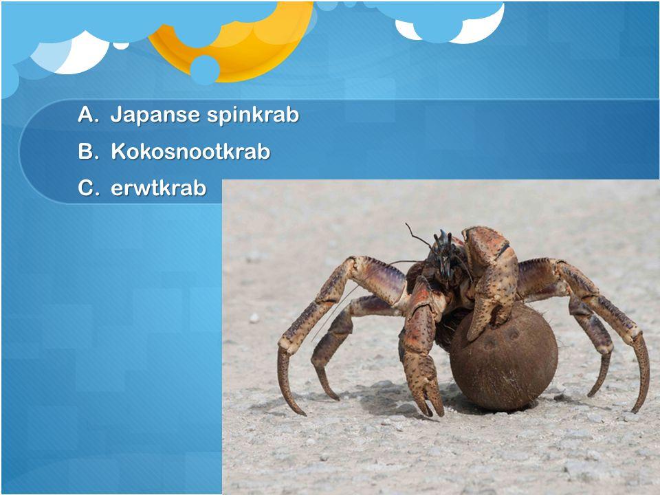 Japanse spinkrab Kokosnootkrab erwtkrab