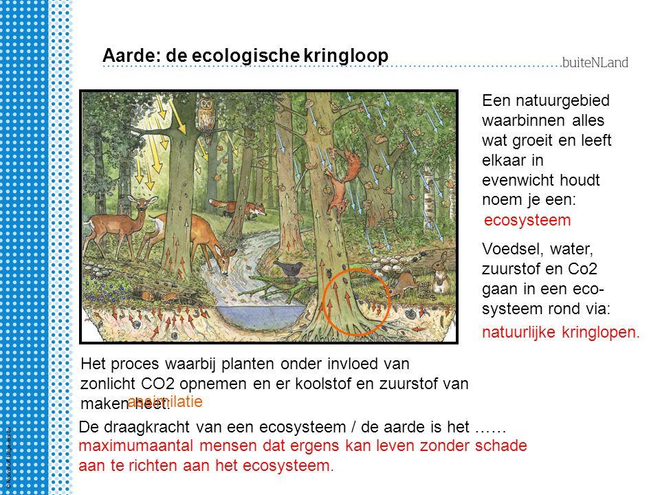 Aarde: de ecologische kringloop
