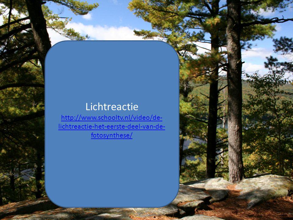 Lichtreactie http://www.schooltv.nl/video/de-lichtreactie-het-eerste-deel-van-de-fotosynthese/