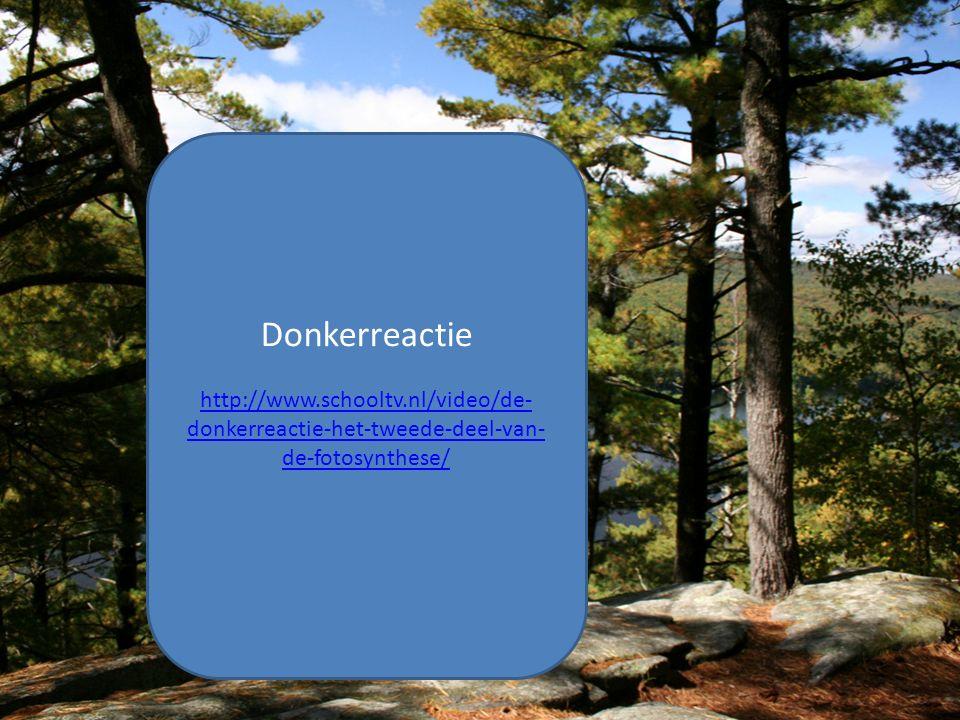 Donkerreactie http://www.schooltv.nl/video/de-donkerreactie-het-tweede-deel-van-de-fotosynthese/