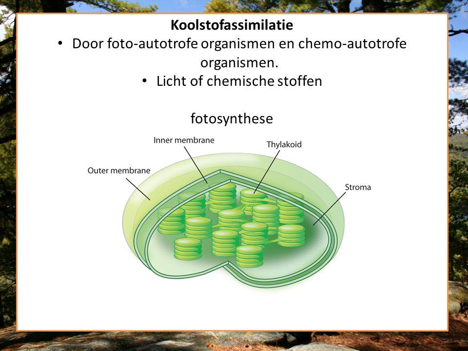 Door foto-autotrofe organismen en chemo-autotrofe organismen.