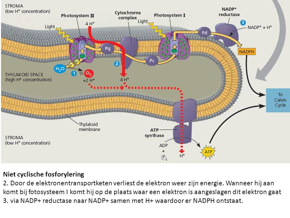 Niet cyclische fosforylering