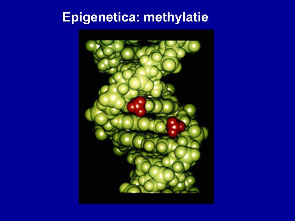 Epigenetica: methylatie