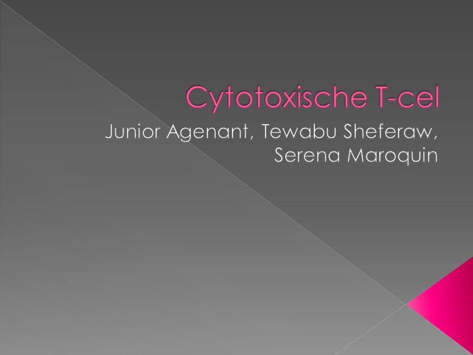 Junior Agenant, Tewabu Sheferaw, Serena Maroquin