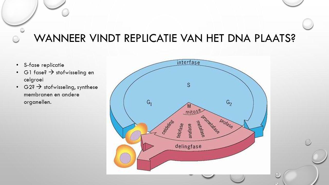 Wanneer vindt replicatie van het DNA plaats