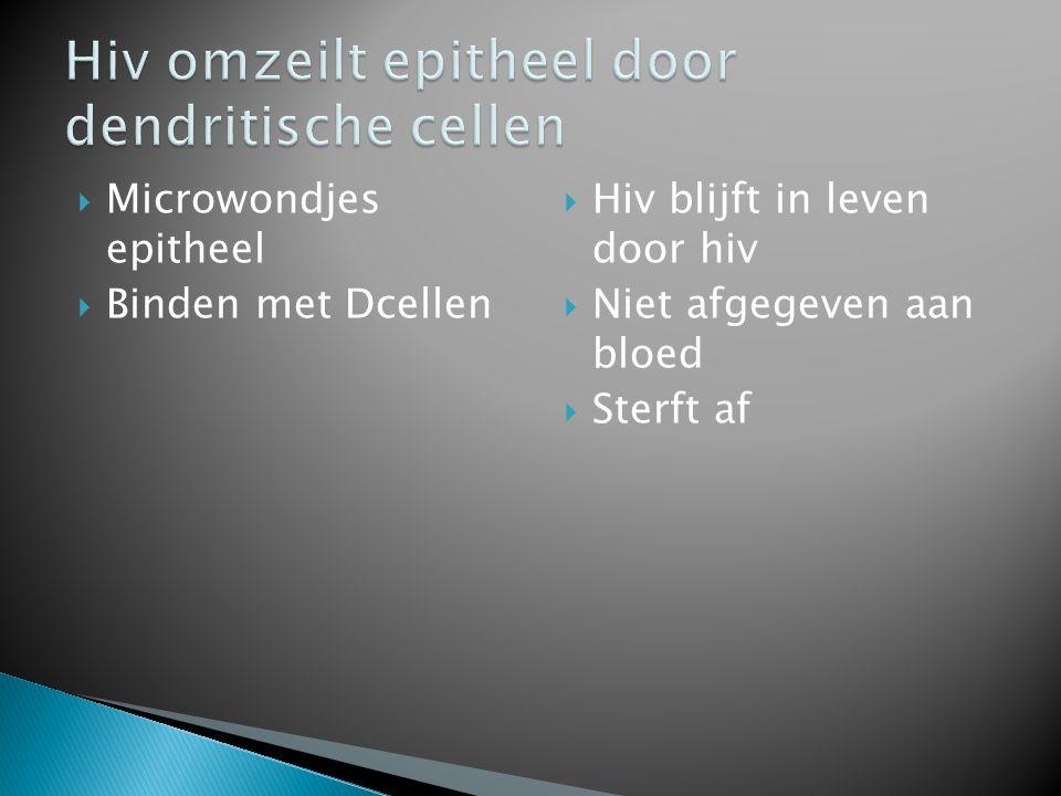 Hiv omzeilt epitheel door dendritische cellen
