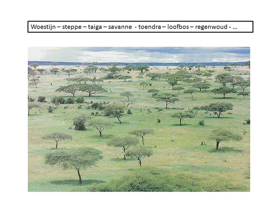 Woestijn – steppe – taiga – savanne - toendra – loofbos – regenwoud - …