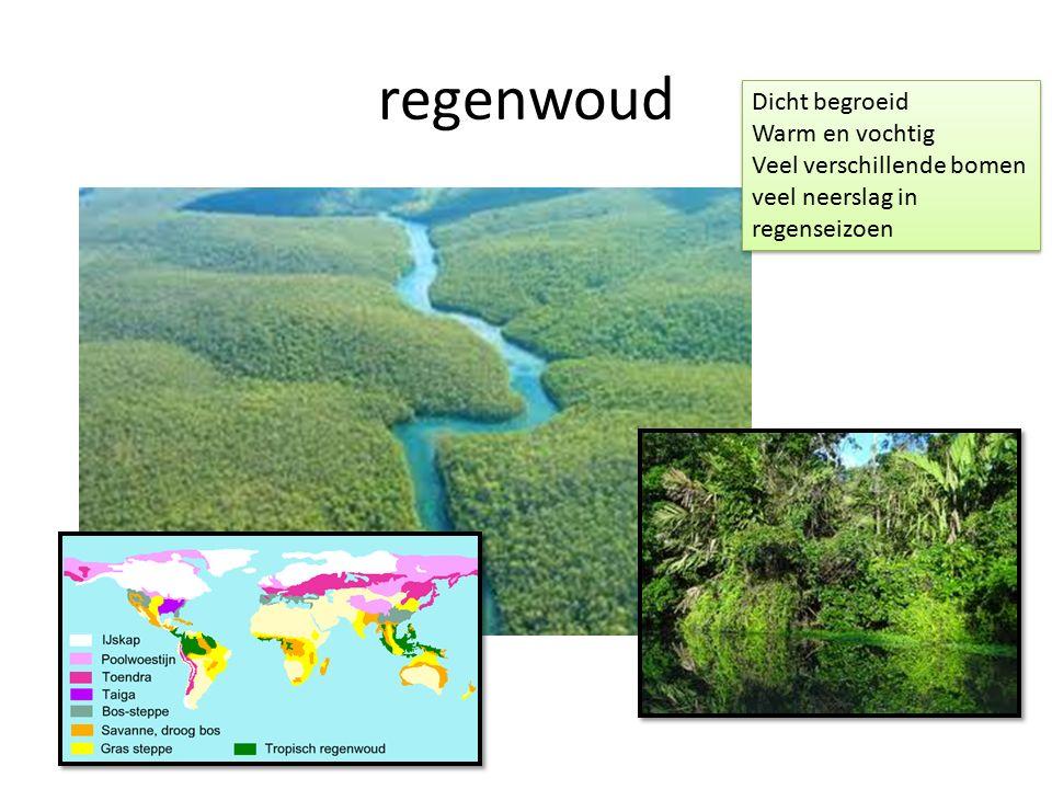 regenwoud Dicht begroeid Warm en vochtig Veel verschillende bomen