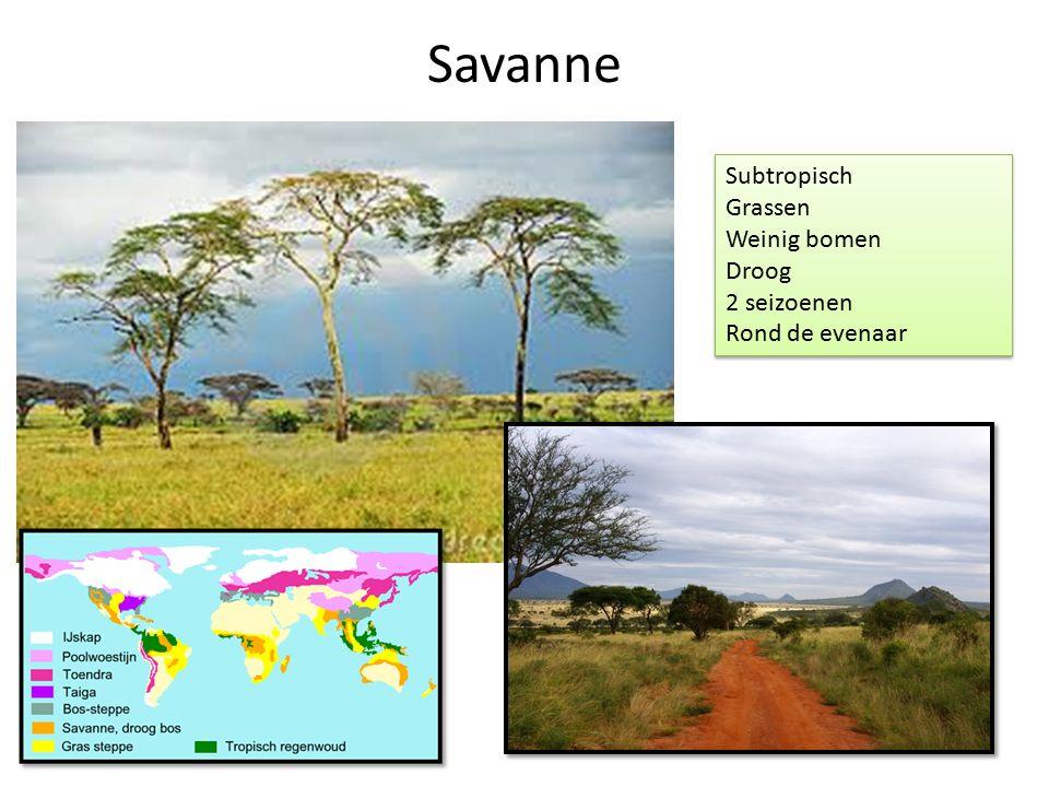 Savanne Subtropisch Grassen Weinig bomen Droog 2 seizoenen