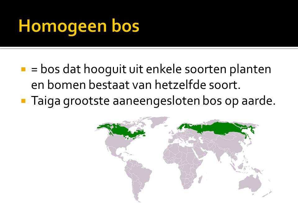 Homogeen bos = bos dat hooguit uit enkele soorten planten en bomen bestaat van hetzelfde soort.