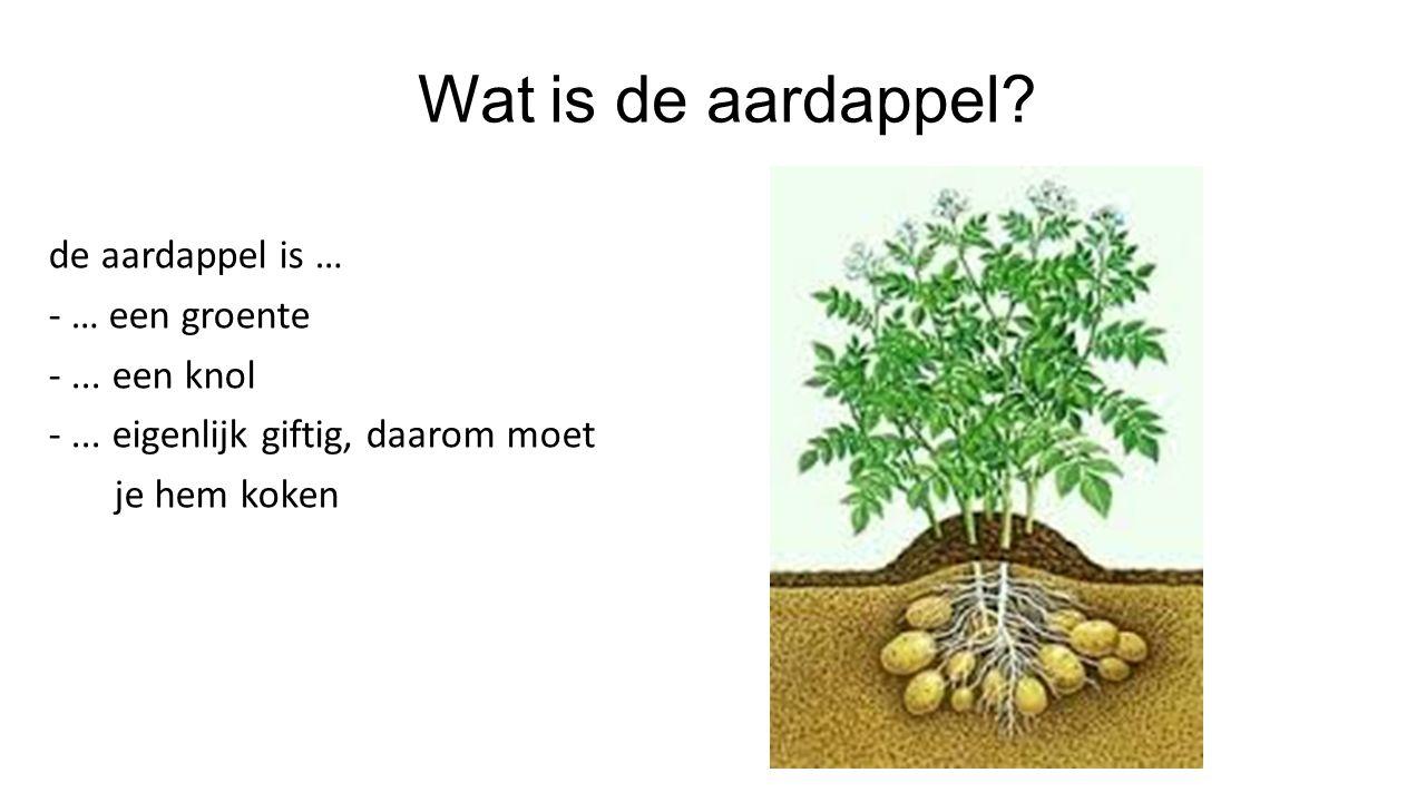 Wat is de aardappel. de aardappel is … - … een groente - ...