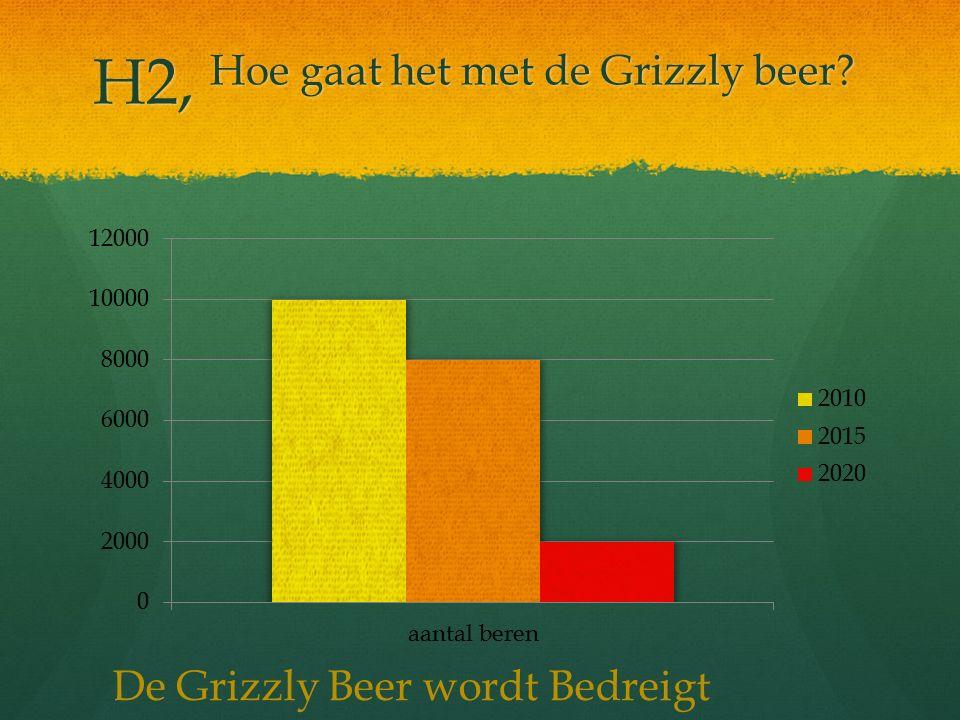 H2, Hoe gaat het met de Grizzly beer