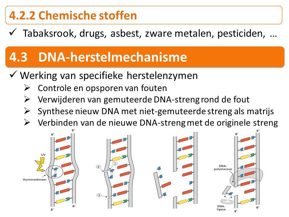 4.3 DNA-herstelmechanisme