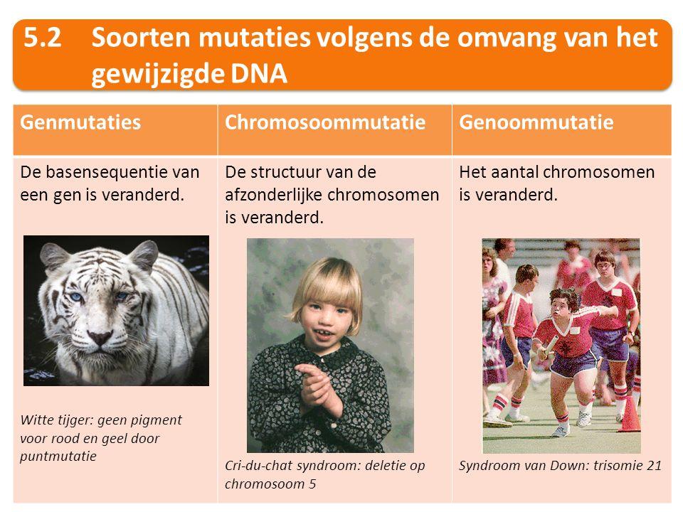 5.2 Soorten mutaties volgens de omvang van het gewijzigde DNA