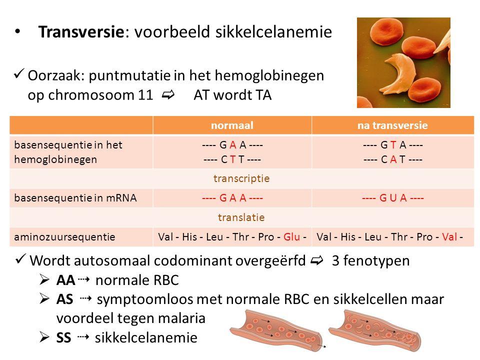 Transversie: voorbeeld sikkelcelanemie