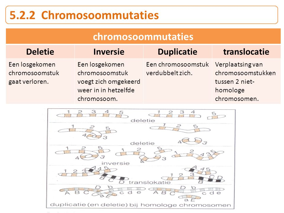 5.2.2 Chromosoommutaties chromosoommutaties Deletie Inversie