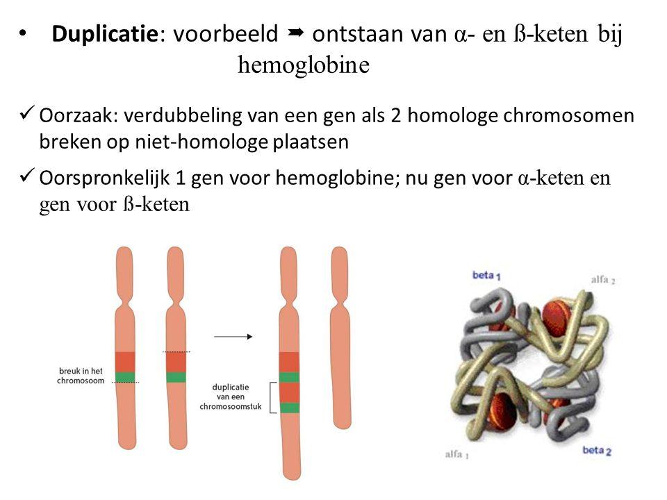 Duplicatie: voorbeeld  ontstaan van α- en ß-keten bij hemoglobine
