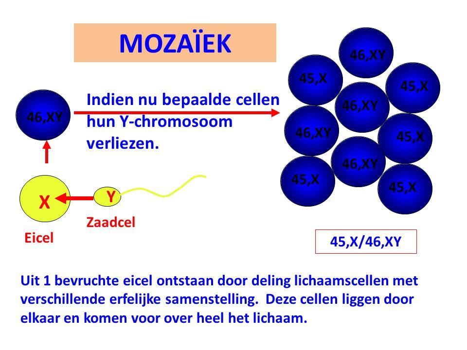 MOZAÏEK X Indien nu bepaalde cellen hun Y-chromosoom verliezen. Y