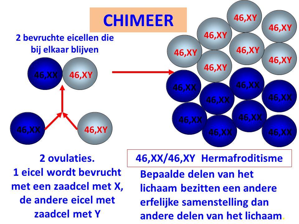 46,XY CHIMEER. 46,XY. 46,XY. 2 bevruchte eicellen die bij elkaar blijven. 46,XY. 46,XY. 46,XY.