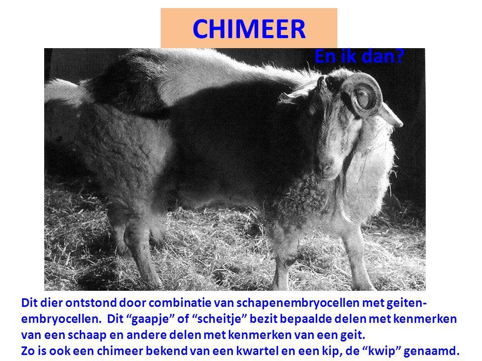 CHIMEER En ik dan